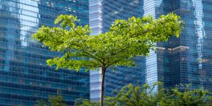 Garden Cities Sustainable Spotlight